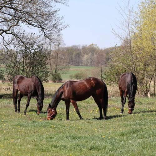 Nasze konie w końcu w zielonym raju!