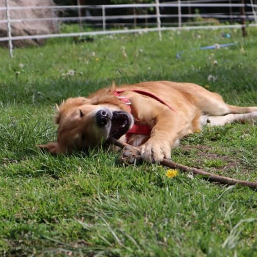 Zrozumieć naszego psa- dlaczego pies szczeka?