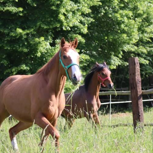 Bajka dwóch koni, która stała się rzeczywistością z koszmaru dzięki naszej pracy i waszemu wsparciu.