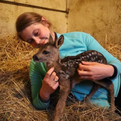Czy powinniśmy pomagać zwierzęcym maluchom, które znaleźliśmy gdzieś w terenie bez opieki matki? Nie!!! Dotyk skazuje na śmierć i nie jest to przesadzone stwierdzenie????.