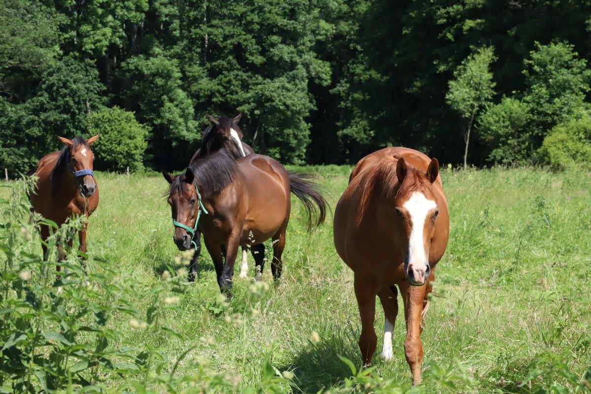 Koń na łące, koniem szczęśliwym – co koń je, oprócz trawy?
