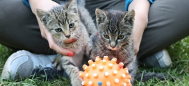 Dziękujemy za pomoc Tulusiowi- kot znaleziony w lesie