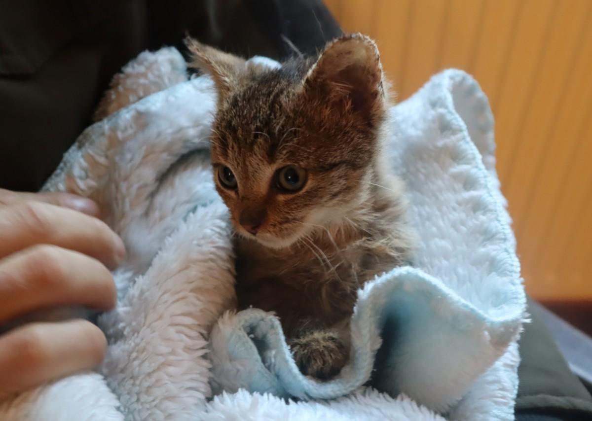 Nowe informację o pobitym kocie-Trufelku