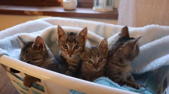 Dziękujemy za pomoc tym maleństwom- kotki są już do adopcji realnej!